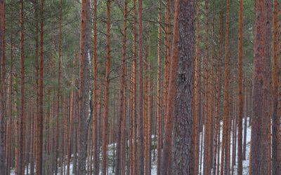 Mož, ki je sadil drevesa